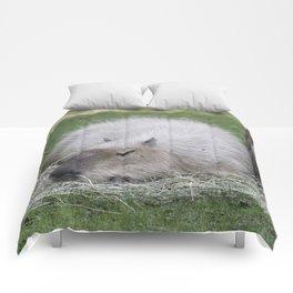 Capybara 215 A Comforters