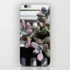 Succulent in Sunlight iPhone & iPod Skin