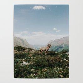 Bighorn Overlook Poster
