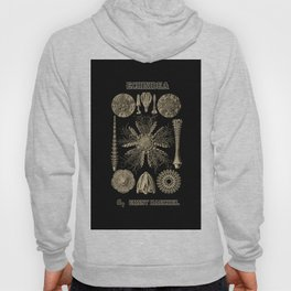 """Echinidea"" from ""Art Forms of Nature"" by Ernst Haeckel Hoody"