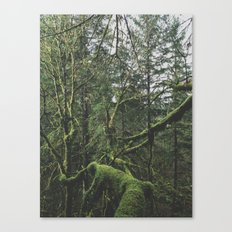 Moss Covered Trees Canvas Print