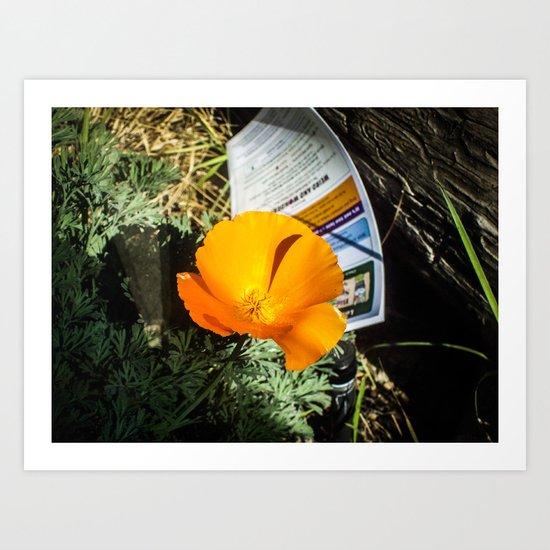 A Bright Orange Poppy Art Print