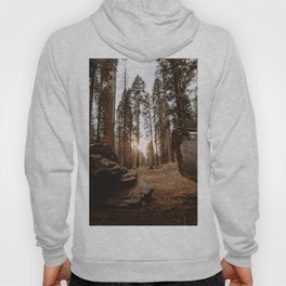 Light Between Fallen Sequoias Hoody