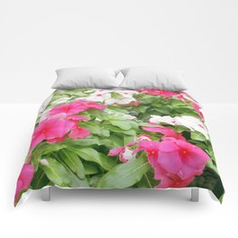 Pink & White Comforters