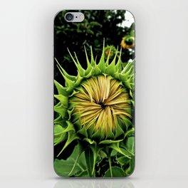 Blooming Sunflower iPhone Skin