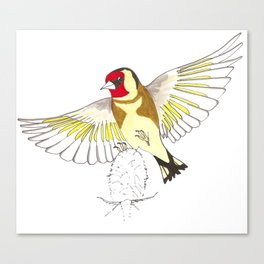 Goldfinch in flight Canvas Print