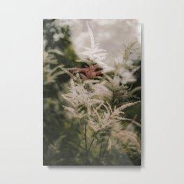 Astilbe, Double Exposure Metal Print