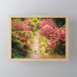 Footpath with azaleas Framed Mini Art Print