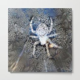 Frosty Spider Metal Print