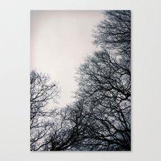 Tree silhouettes Canvas Print