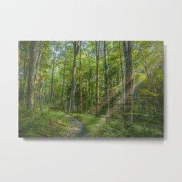 Sunbeams in Green Forest Metal Print