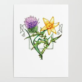 Thistle and Daffodil Poster