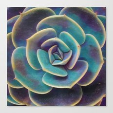 Purple & Blue Succulent Canvas Print