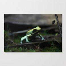 Poison Dart Frog Mint Terribilis Canvas Print