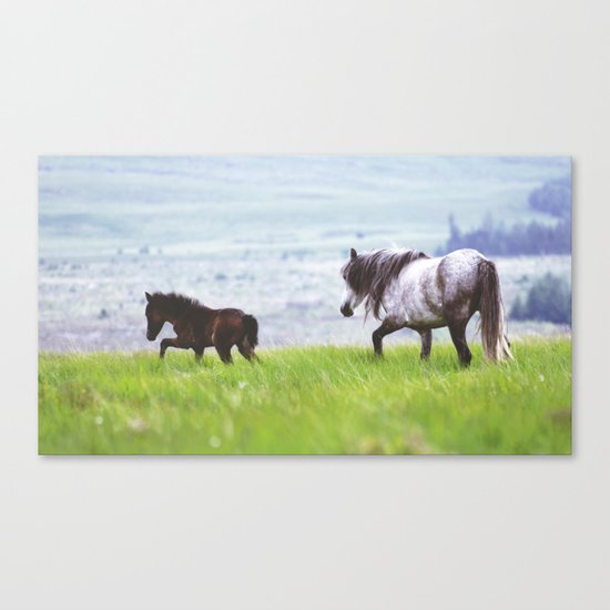 Mother & Foal Canvas Print