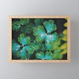 Lucky Clover Framed Mini Art Print