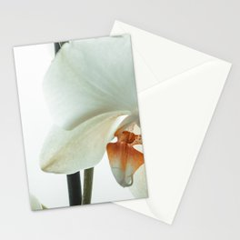 White orchid flower Stationery Cards