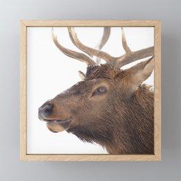 Watercolor Elk Bull 22 Framed Mini Art Print