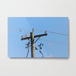 Red Tailed Hawk on Telephone Pole 3 Metal Print