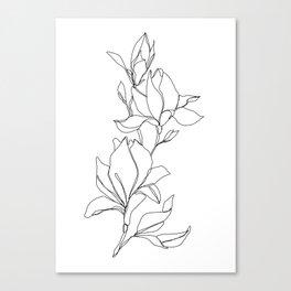 Botanical illustration line drawing - Magnolia Canvas Print