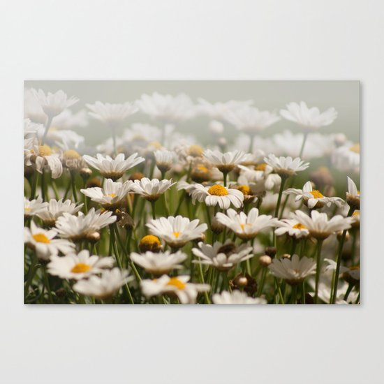 Wave of Daisies 2171 Canvas Print