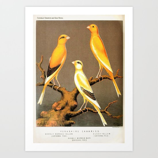 Orange Canaries  Art Print