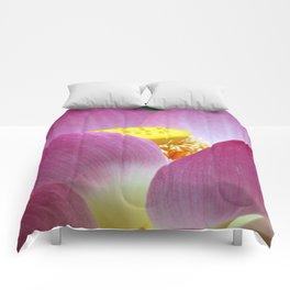 Peek-a-boo Beauty Comforters