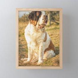 St Bernard dog in the sunset Framed Mini Art Print