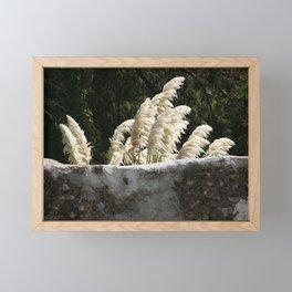 Flowering Pampas Grass Plumes Framed Mini Art Print