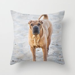 Shar Pei dog standing on the beach Throw Pillow