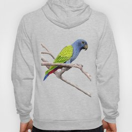 Reichenow's Parrot Hoody