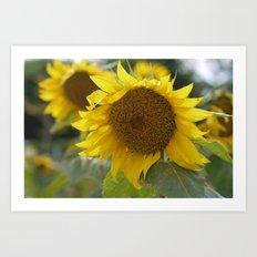 Sun Flower Art Print