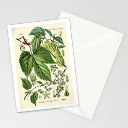 Humulus lupulus (common hop or hops) - Vintage botanical illustration Stationery Cards