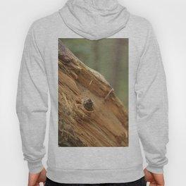 broken tree Hoody