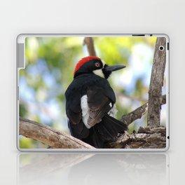 Acorn Woodpecker in Malibu Laptop & iPad Skin