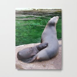 Snuggling Seals Metal Print