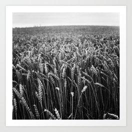 Harvest II Art Print