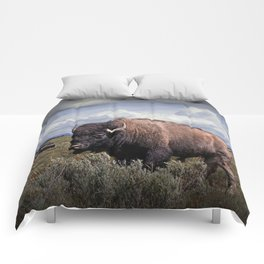 American Buffalo or Bison in the Grand Teton National Park Comforters