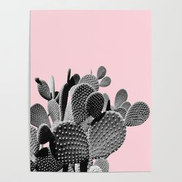 Bunny Ears Cactus on Pastel Pink #cactuslove #tropicalart Poster