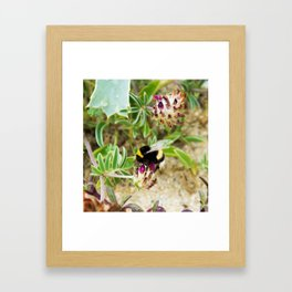 bumble bee on the dunes I Framed Art Print