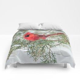 Cocky Cardinal Comforters