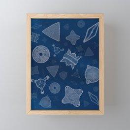 Diatoms - microscopic sea life Framed Mini Art Print