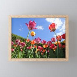 tulips in the sun Framed Mini Art Print