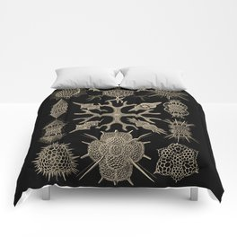 """""""Spumellaria"""" from """"Art Forms of Nature"""" by Ernst Haeckel Comforters"""