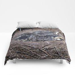 Baby robins in nest (fledglings) Comforters