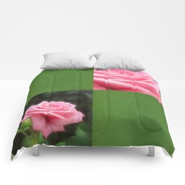 Pink Roses in Anzures 3 Blank Q5F0 Comforters