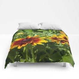 Denver Daisy Comforters