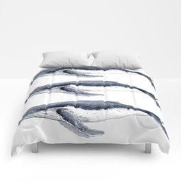 Humpback whale (Megaptera novaeangliae) Comforters
