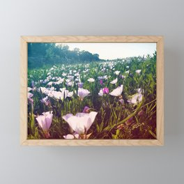 Field of Pink Evening Primrose - Texas Wildflowers Framed Mini Art Print