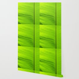 banana tree leaf Wallpaper